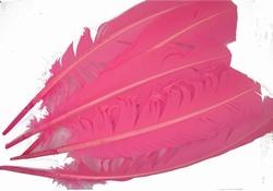 Vogelveren, gemiddeld 28cm lang, per vijf stuks, roze