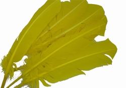 Vogelveren, gemiddeld 28cm lang, per vijf stuks, geel